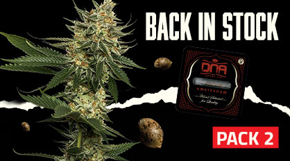 Back in Stock seeds at DNA Genetics Pack 2