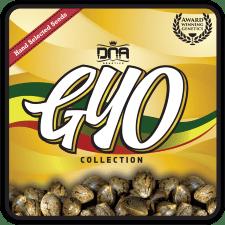 G.Y.O Cannabis seeds