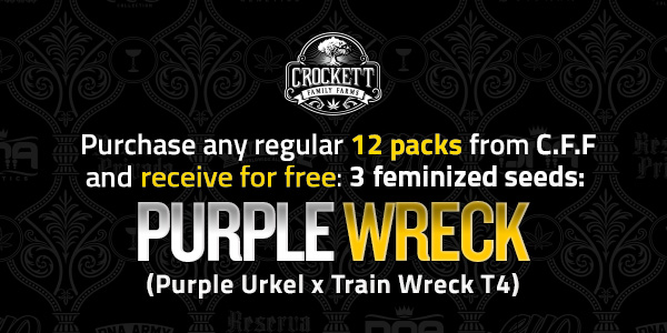 Purchase any 12 packs from CFF receive free Purple Wreck seeds